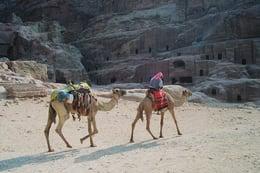 Shooting Stars and Shay in Jordan's Dana Biosphere Reserve